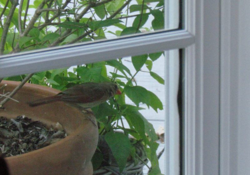 how to stop a bird from attacking your window
